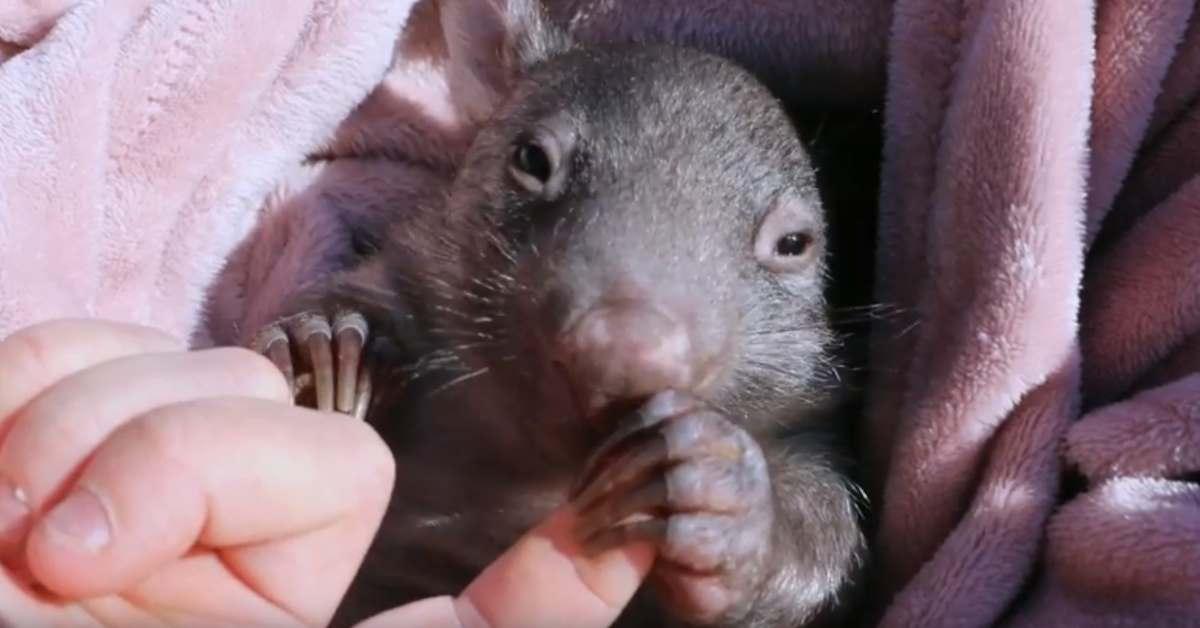 Springtime Cuteness from Australian Baby Animals