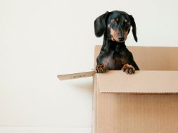 moving-box-2.jpg