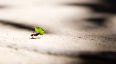 ant-leaf-vlad-tchompalov-unsplash.jpg