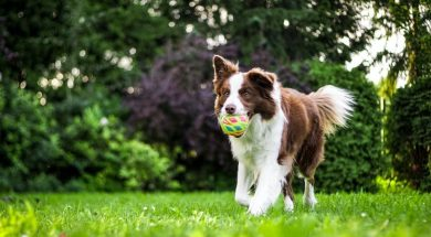 dog-playing-anna-dudkova-unsplash.jpg
