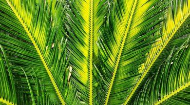 palm-frond-jonny-clow-unsplash.jpg