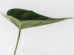 green-leaf-sarah-dorweiler-unsplash.jpg