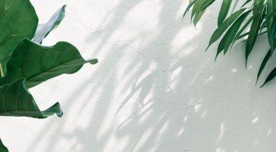plant-pawel-czerwinski-unsplash.jpg